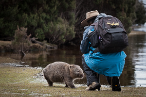 Close Encounter with a Wombat