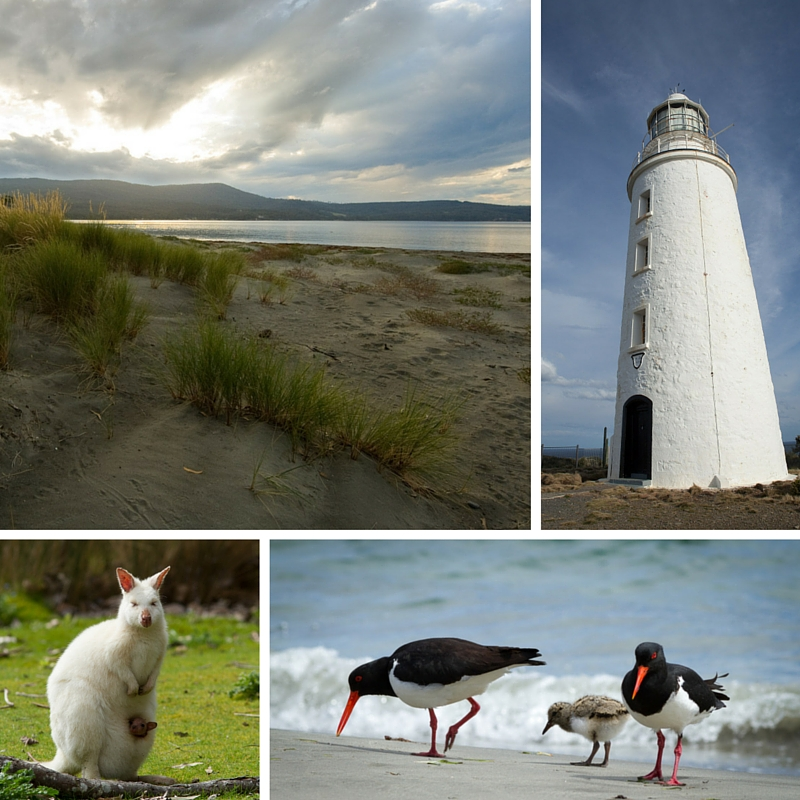 Collage of images from Shutterbug Walkabouts full day tour to Bruny Island, Tasmania