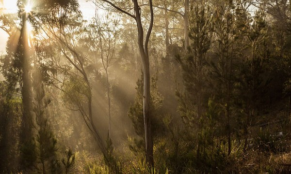 Shutterbug Walkabouts - Sunlight streaming through the trees