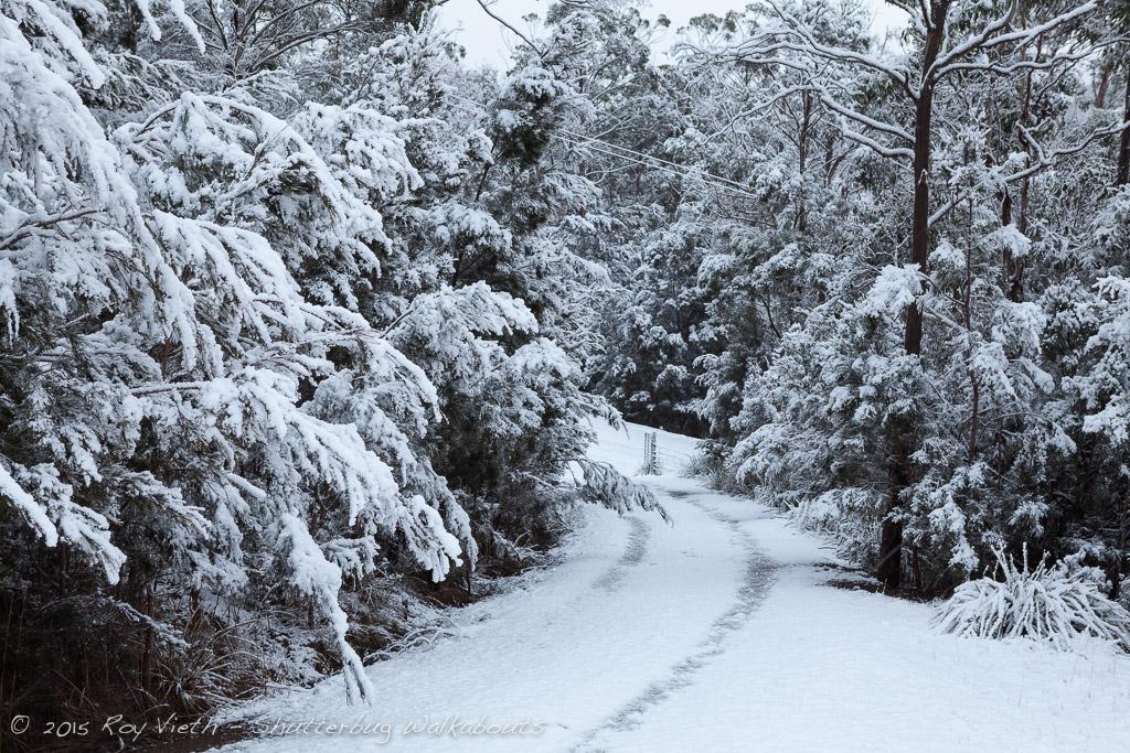 Snow_7256_FB