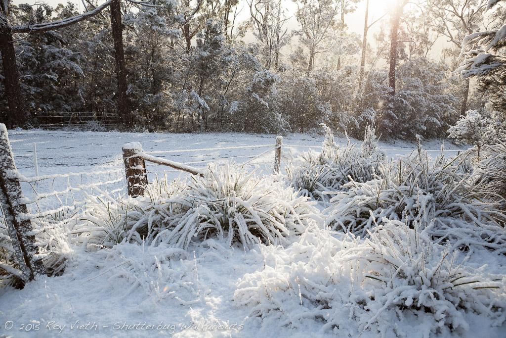Snow_7293_FB