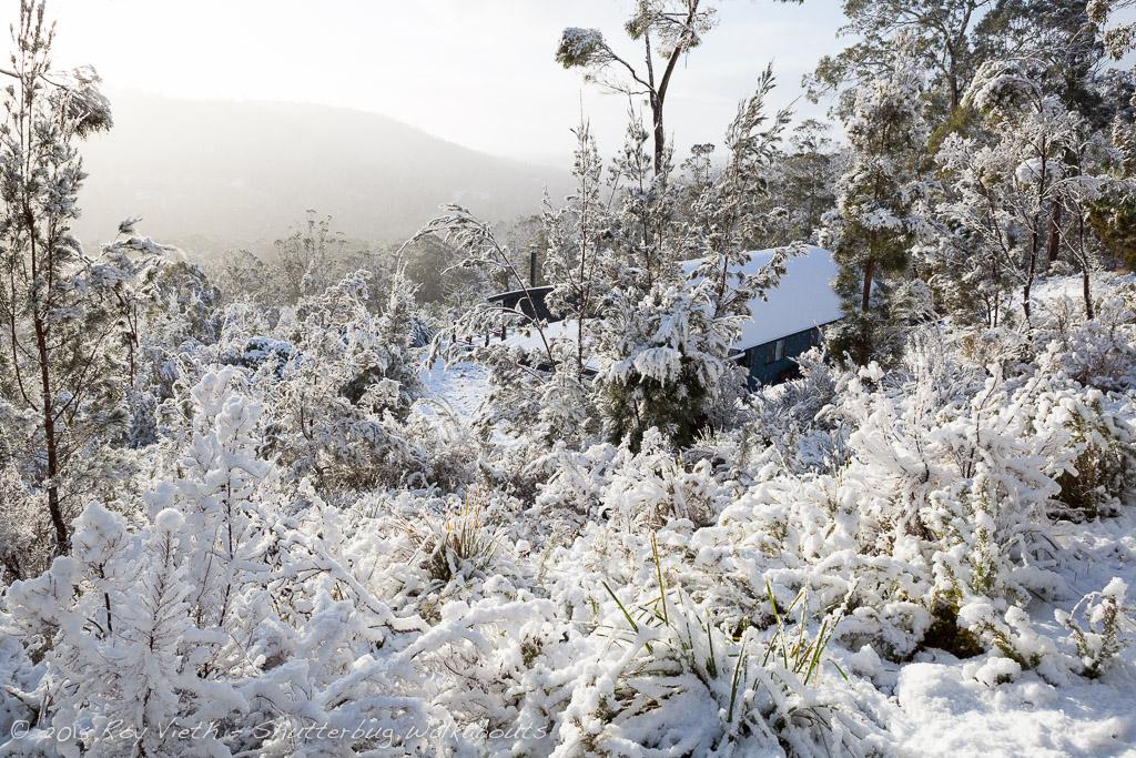 Snow_7306_FB