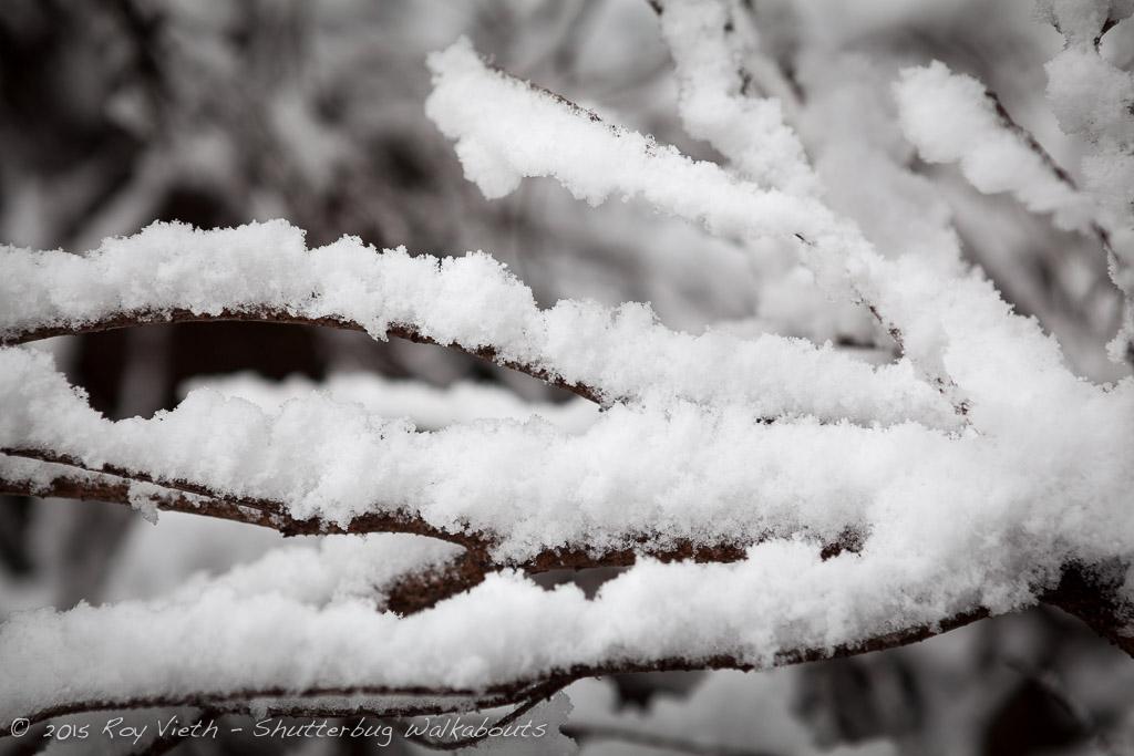 Snow_7335_FB