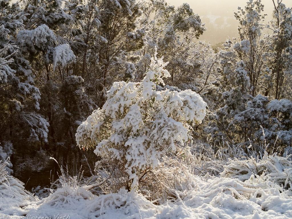 Snow_IMG_5293_FB