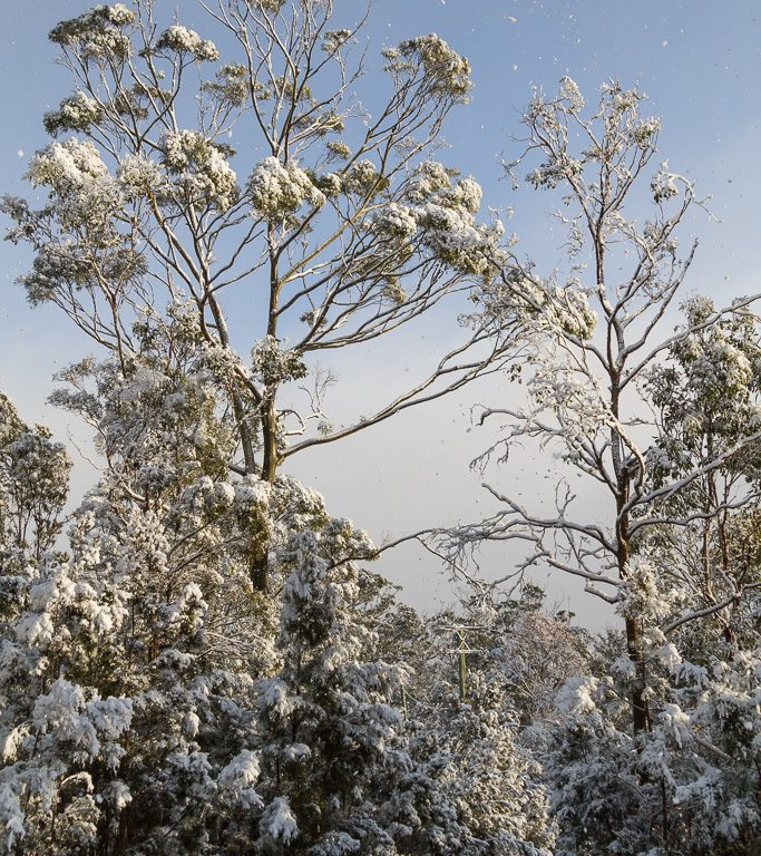 Snow_IMG_5294_FB