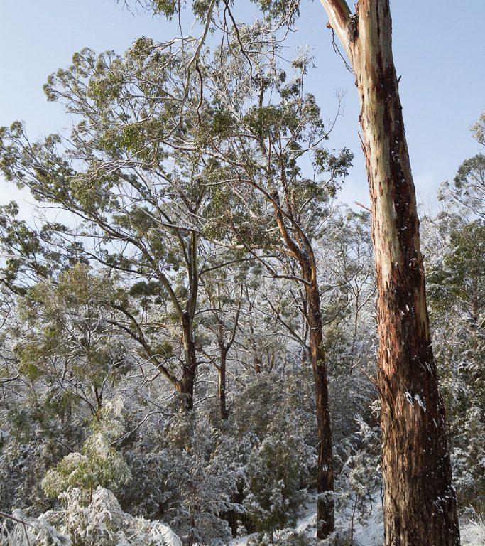 Snow_IMG_5300_FB