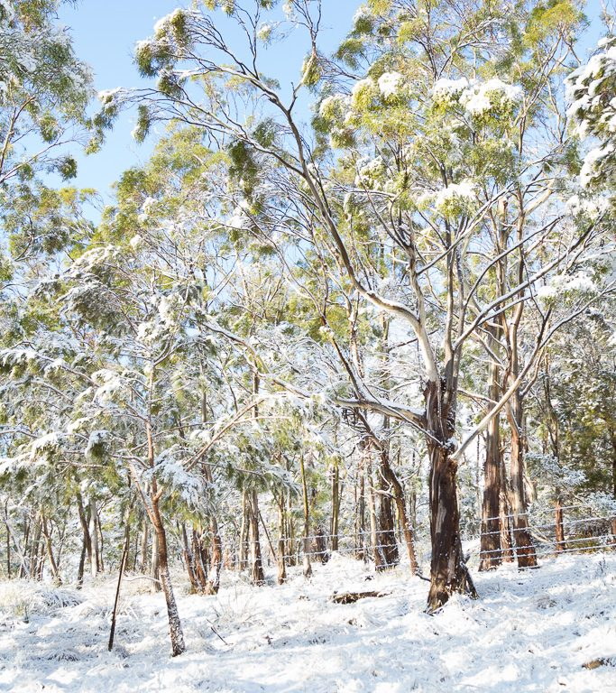 Snow_IMG_5310_FB