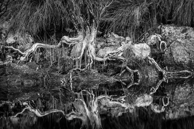 Reflections of the rugged vegetation along the shores of Melaleuca Inlet