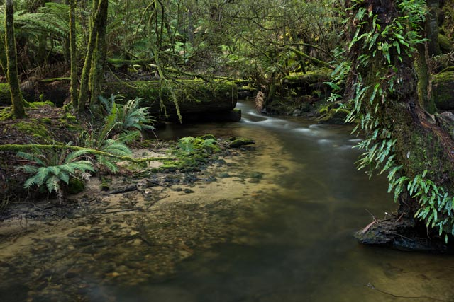 Mt Field - Rainforest stream
