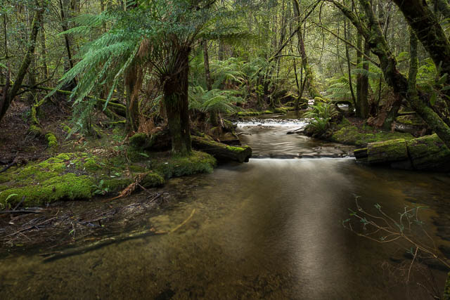Forest stream, Mt Field National Park