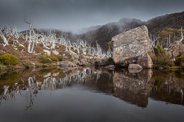 Reflections on a tarn, Tarn shelf walk, Mt Field National Park