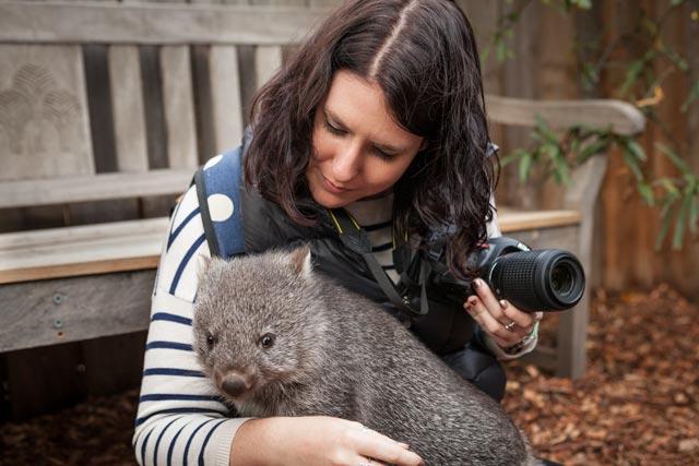 Bonorong - Wombat experience