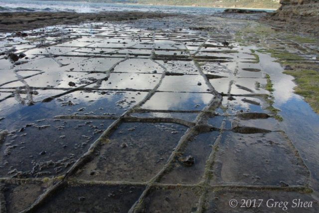 Tessellated Pavement, Tasman Peninsula, Tasmania - photography tuition with Greg Shea