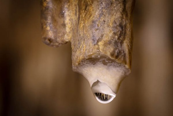 Water droplet on stalactite, Hastings Caves, Tasmania - photo shoot with Shutterbug Walkabouts