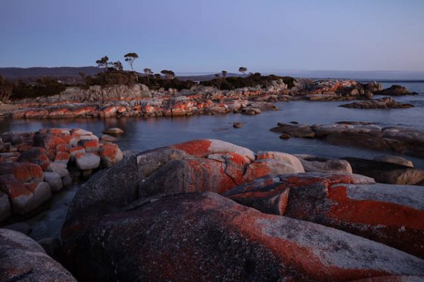 Lichen-covered coastal boulders at dawn at Binalong Bay on the east coast of Tasmania.