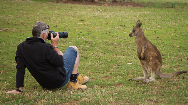 Photographer up close to Forester Kangaroo juvenile at Bonorong Wildlife Sanctuary - wildlife photography tuition