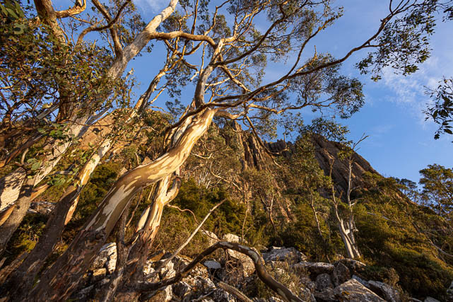 Nature trail walk beneath the 'Organ Pipes' on Mt Wellington - one of the options on a Shutterbug Walkabouts tour or tuition session