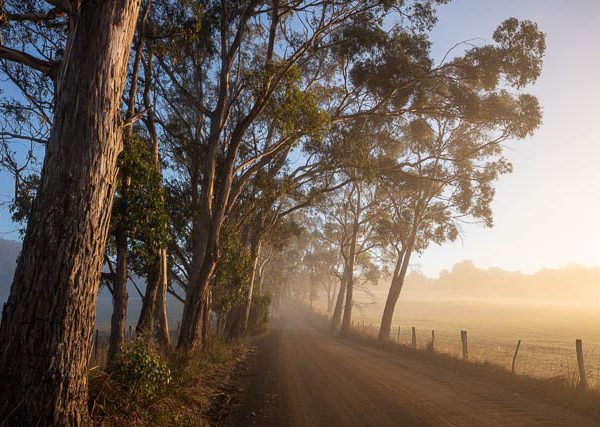 Rural road and landscape on a misty morning, southern Tasmania