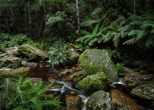 Snug Tiers Nature Reserve, southern Tasmania