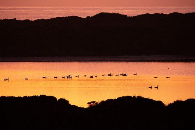 Cameron Inlet wetland Flinders Island