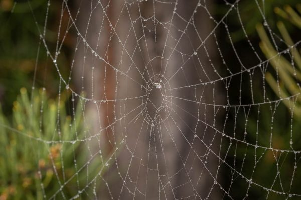 Spider web with dew droplets in forest
