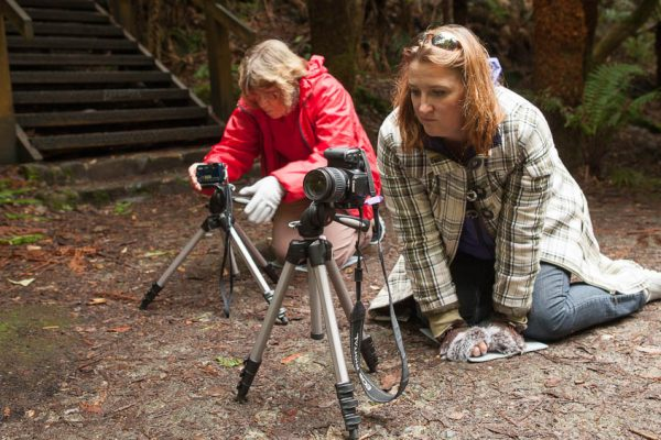 photographers using tripods to take photos in Tasmanian rainforest on photo walk with shutterbug walkabouts