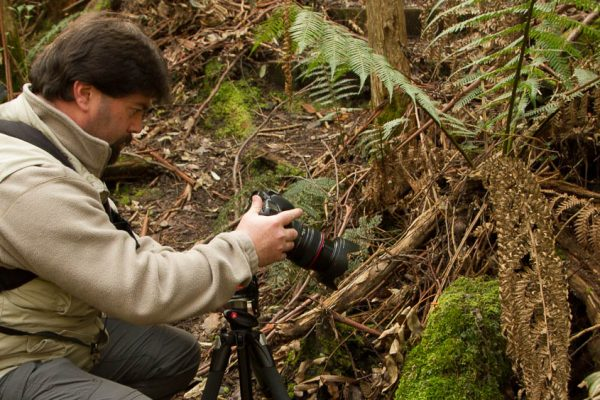 photographer taking photo in Tasmanian rainforest on photo walk with shutterbug walkabouts
