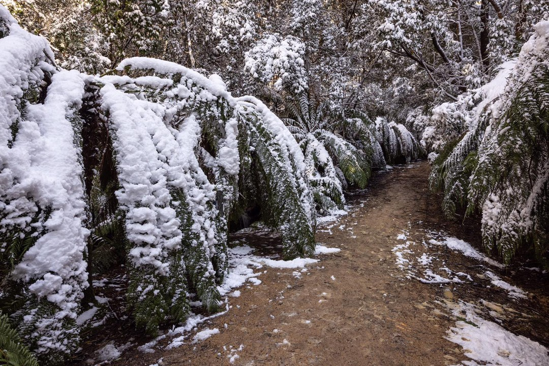 There's something really special about snow covered ferns.   Roy ventured up into the foothills of Mt Wellington this morning and this is the scene that surrounded him…   📷 Roy Vieth - Shutterbug Walkabouts 📌 #MtWellington #hobartandbeyond  #tasmania